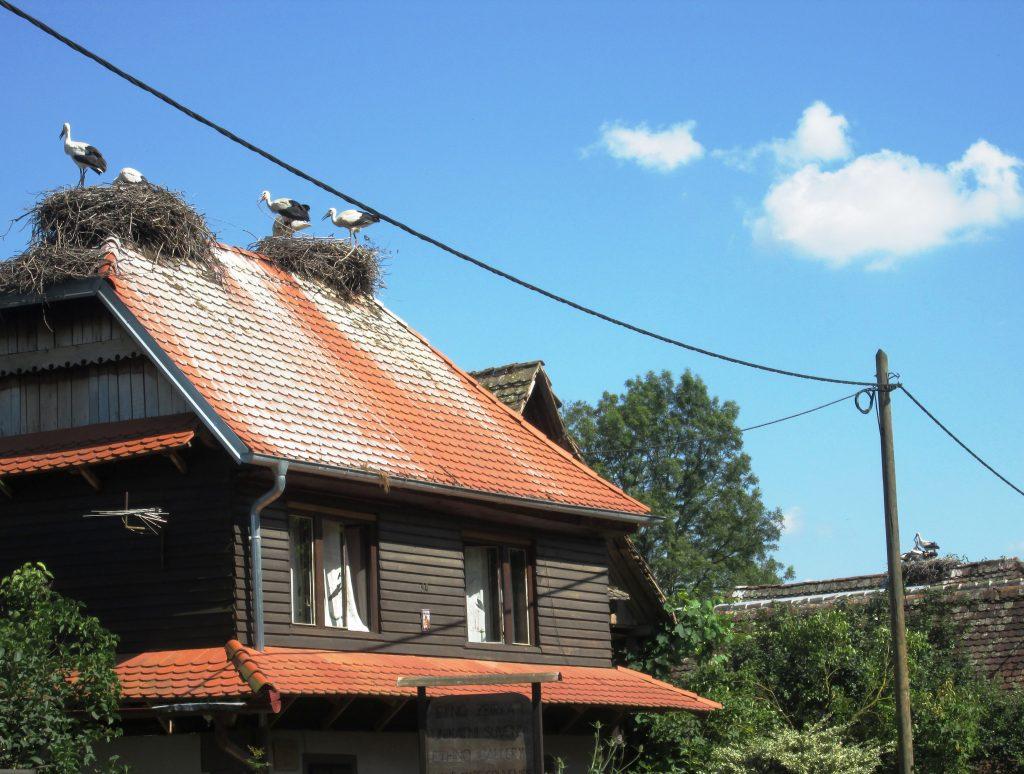 Čigoč, Croatia, village of storks. Tourism. Travel to Croatia.